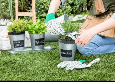 dalani gardening whitehouse52